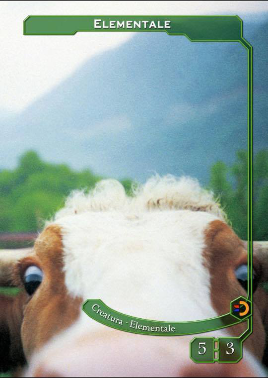 mucca1